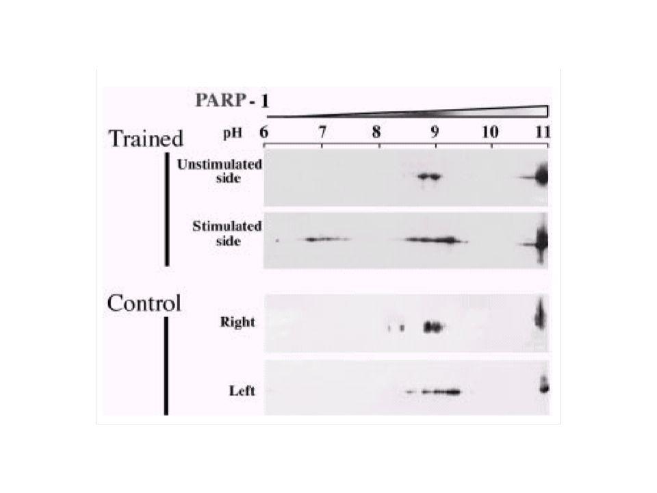 A poliADP-ribosilação é uma resposta a danos teciduais.