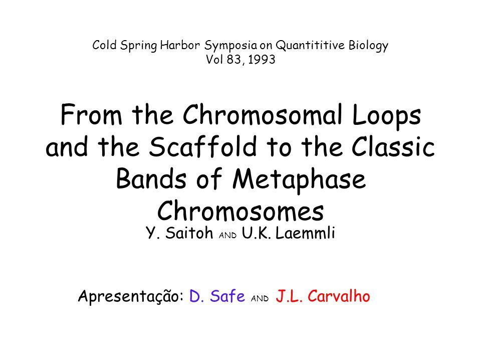 Dois tipos de loops: Q/G e R Fila AT Estrutura do cromossomo compacto Modelo Loop/Scaffold de cromossomos nativos