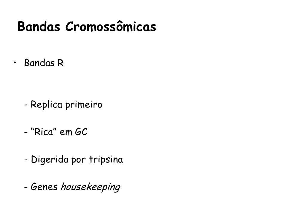 Bandas R - Replica primeiro - Rica em GC - Digerida por tripsina - Genes housekeeping Bandas Cromossômicas