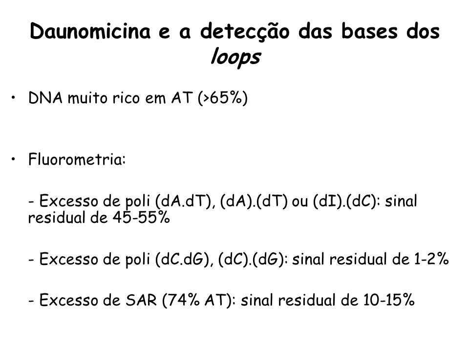 Daunomicina e a detecção das bases dos loops DNA muito rico em AT (>65%) Fluorometria: - Excesso de poli (dA.dT), (dA).(dT) ou (dI).(dC): sinal residu