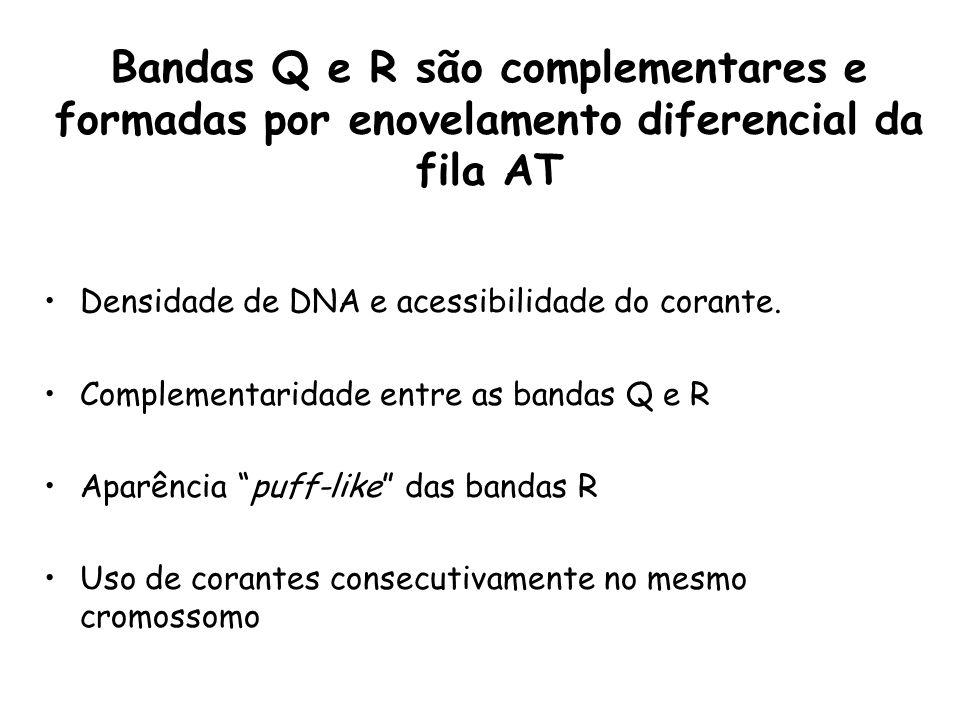 Densidade de DNA e acessibilidade do corante. Complementaridade entre as bandas Q e R Aparência puff-like das bandas R Uso de corantes consecutivament