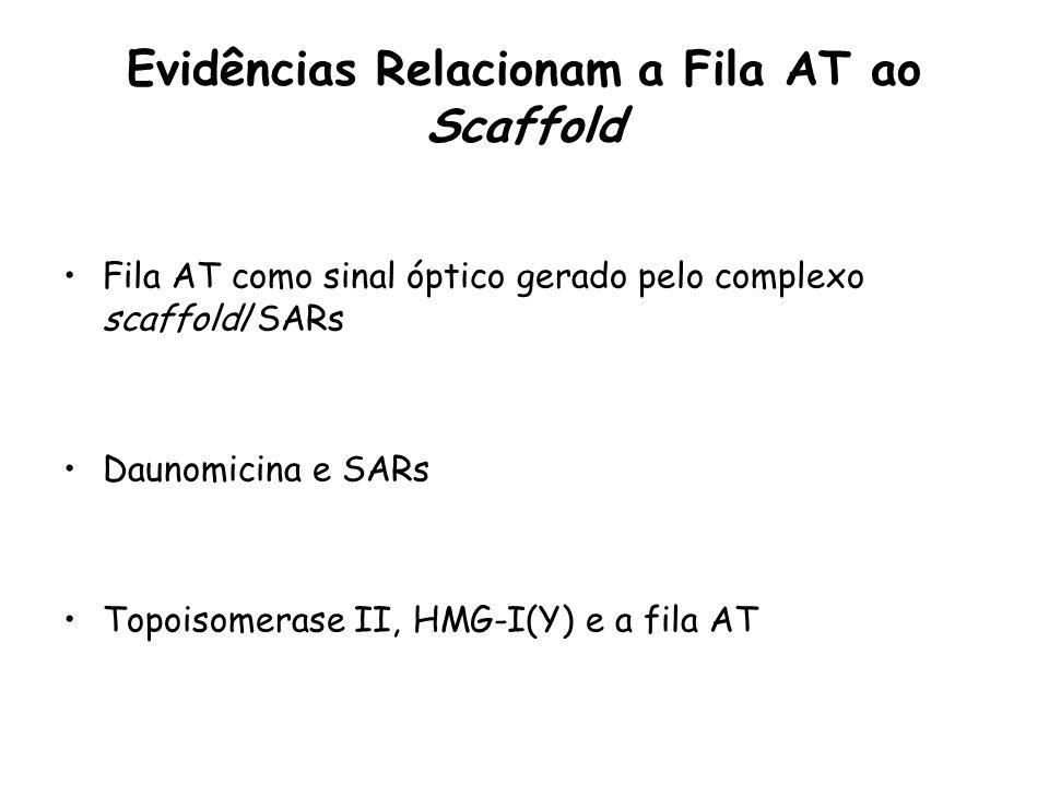 Evidências Relacionam a Fila AT ao Scaffold Fila AT como sinal óptico gerado pelo complexo scaffold/SARs Daunomicina e SARs Topoisomerase II, HMG-I(Y)