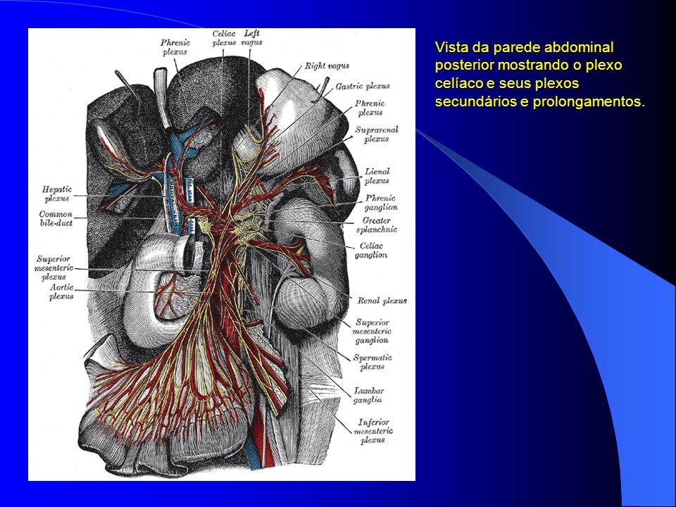 Vista da parede abdominal posterior mostrando o plexo celíaco e seus plexos secundários e prolongamentos.