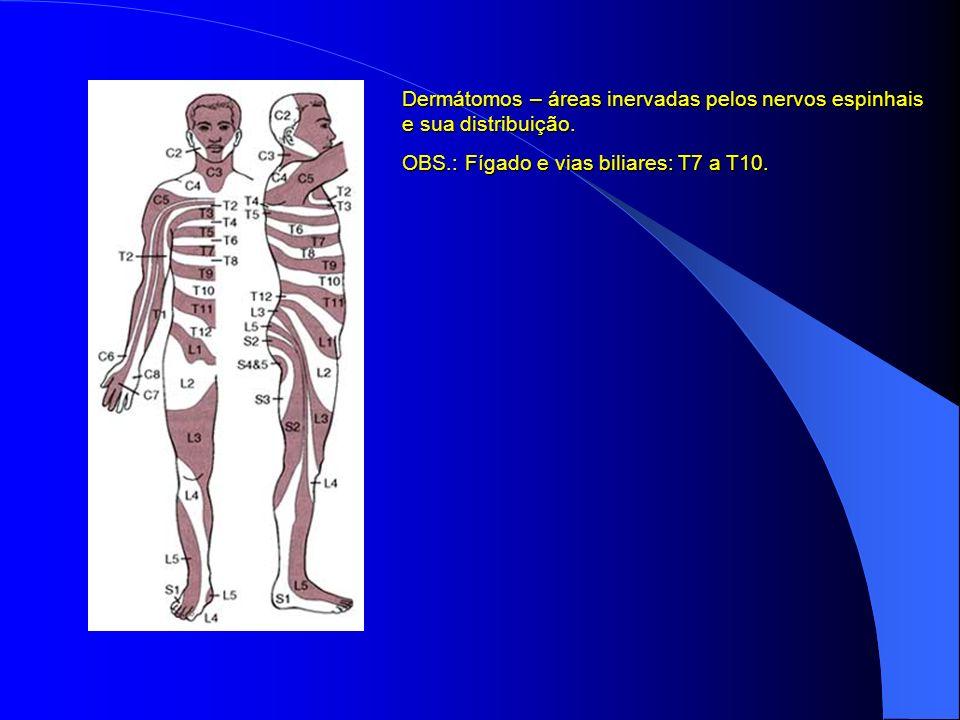 Dermátomos – áreas inervadas pelos nervos espinhais e sua distribuição. OBS.: Fígado e vias biliares: T7 a T10.