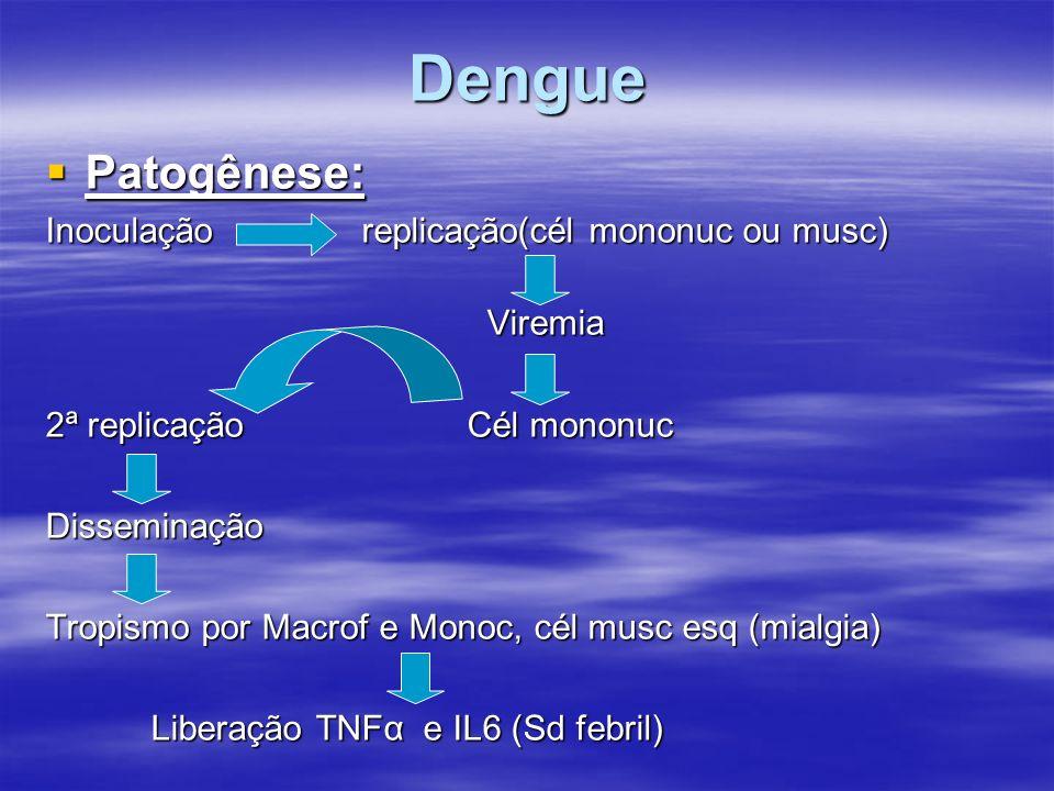 Dengue Patogênese: Patogênese: Inoculação replicação(cél mononuc ou musc) Viremia Viremia 2ª replicação Cél mononuc Disseminação Tropismo por Macrof e