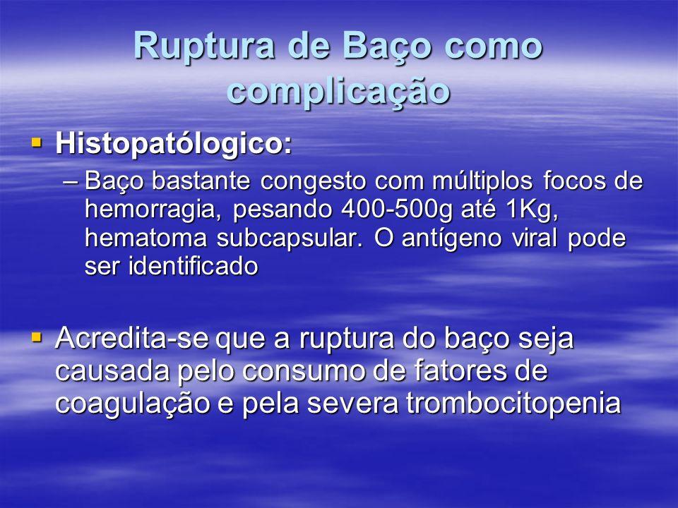 Ruptura de Baço como complicação Histopatólogico: Histopatólogico: –Baço bastante congesto com múltiplos focos de hemorragia, pesando 400-500g até 1Kg