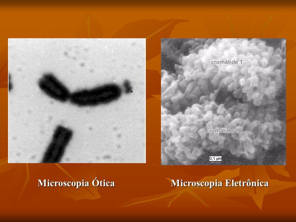 Bandas Q e R A estrutura dos cromossomos metafásicos considerada neste modelo combina com a Citogenética clássica e com os estudos bioquímicos.