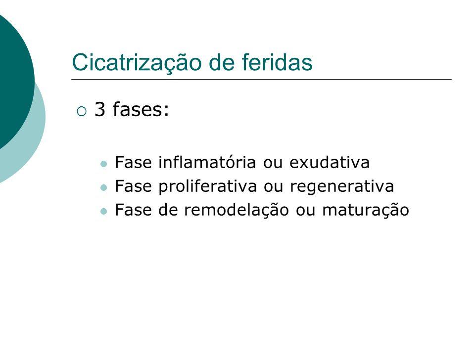 Cicatrização de feridas Fase inflamatória Resposta imediata ao trauma Hemostasia e inflamação Migração de celulas para a ferida por quimiotaxia Secreção de citocinas e fatores de crescimento Ativação das celulas migrantes