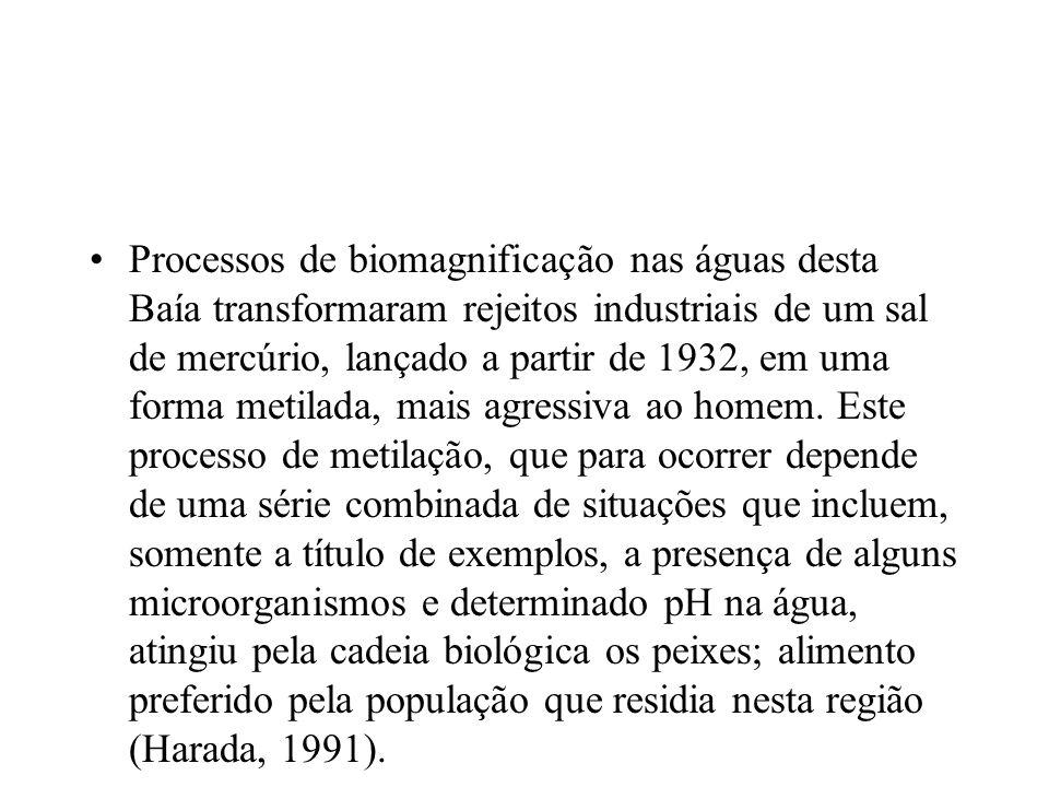 Processos de biomagnificação nas águas desta Baía transformaram rejeitos industriais de um sal de mercúrio, lançado a partir de 1932, em uma forma met