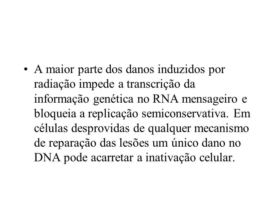 A maior parte dos danos induzidos por radiação impede a transcrição da informação genética no RNA mensageiro e bloqueia a replicação semiconservativa.
