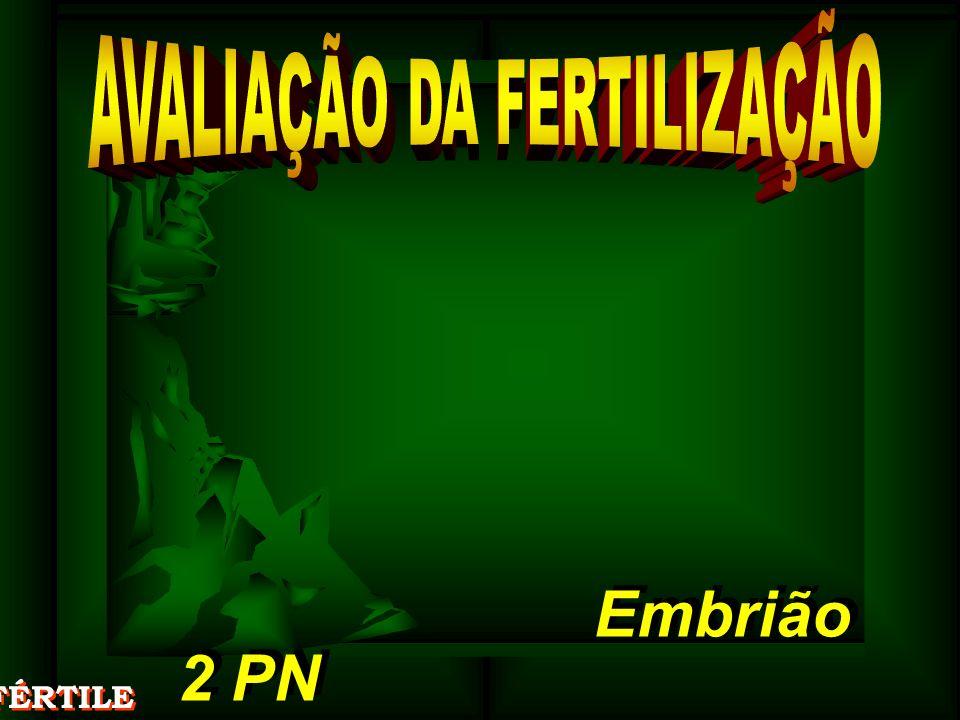 2 PN 2 PN Embrião Embrião FÉRTILE
