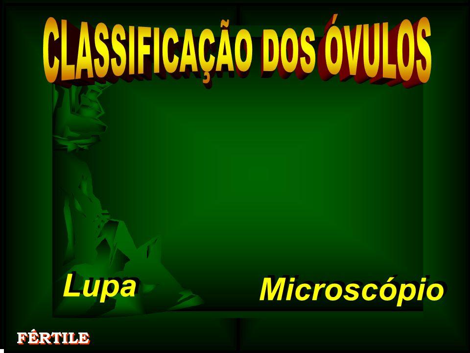 Lupa Lupa Microscópio Microscópio FÉRTILE