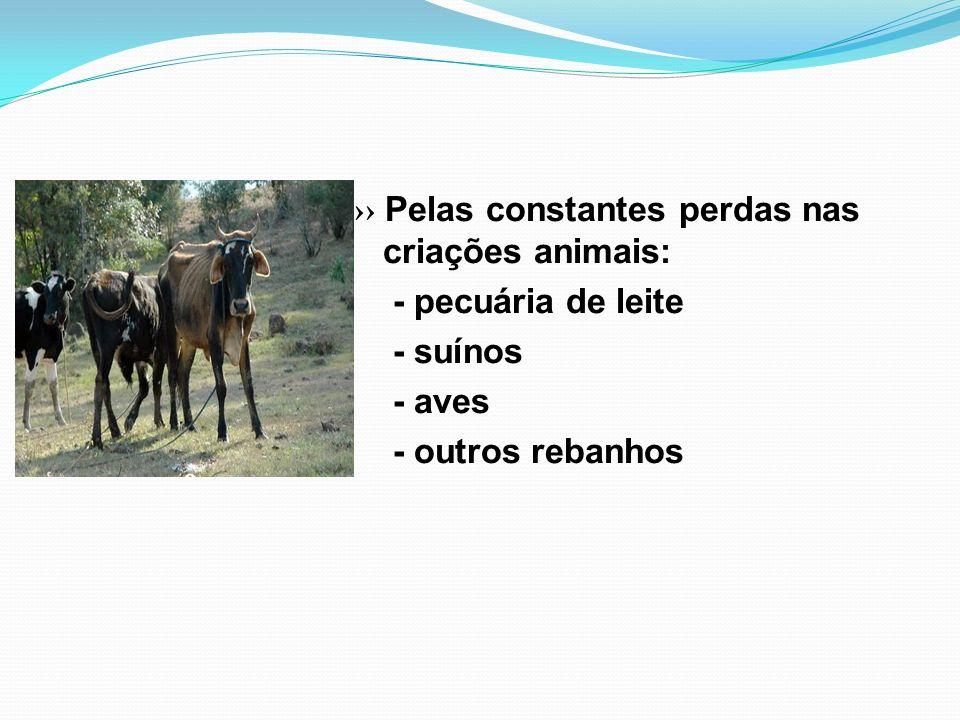 Pelas constantes perdas nas criações animais: - pecuária de leite - suínos - aves - outros rebanhos