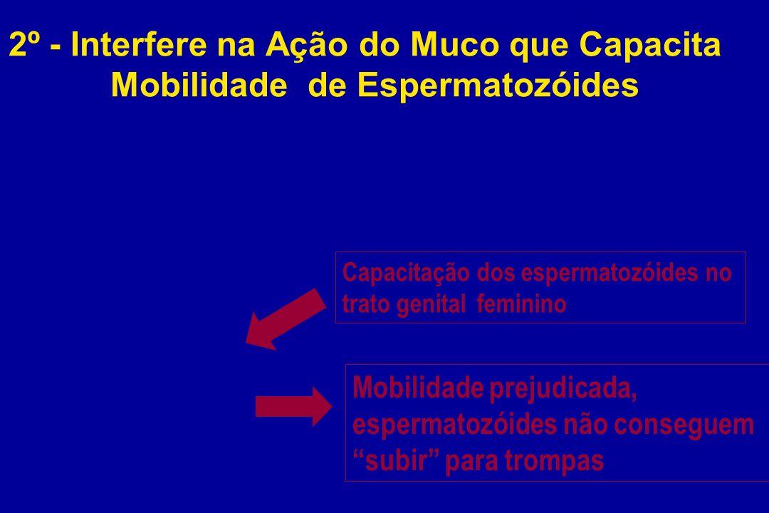 2º - Interfere na Ação do Muco que Capacita Mobilidade de Espermatozóides Capacitação dos espermatozóides no trato genital feminino Mobilidade prejudi