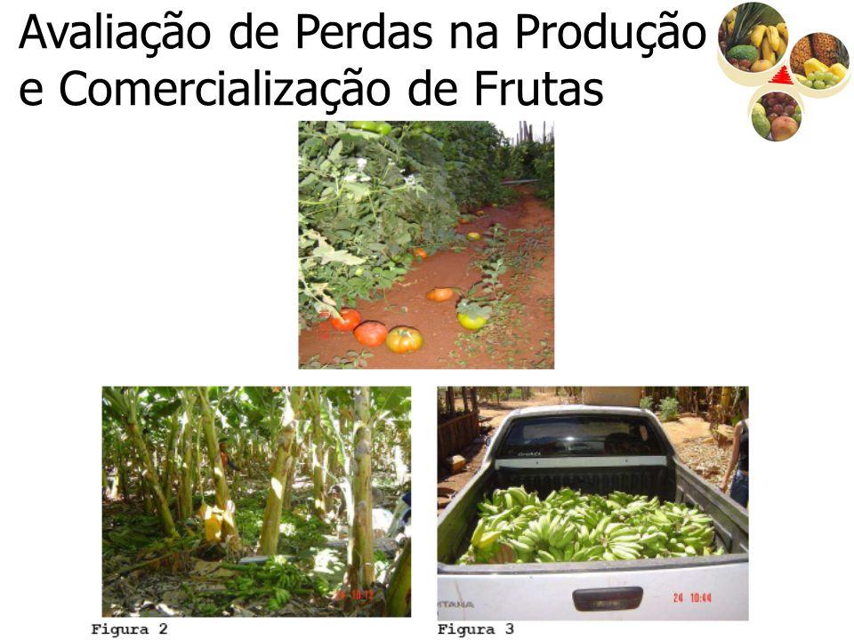 Ações para 2008 1.Projeto de Exportação de Produtos Hortícolas de Minas Gerais para os Estados Unidos - mandioca, banana prata e abacaxi pérola (investimento: R$ 200 mil).