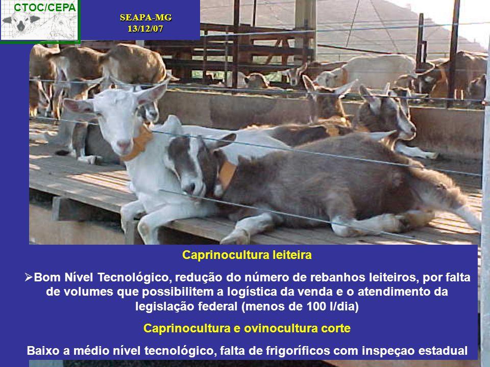 CTOC/CEPA SEAPA-MG13/12/07 Caprinocultura leiteira Bom Nível Tecnológico, redução do número de rebanhos leiteiros, por falta de volumes que possibilit