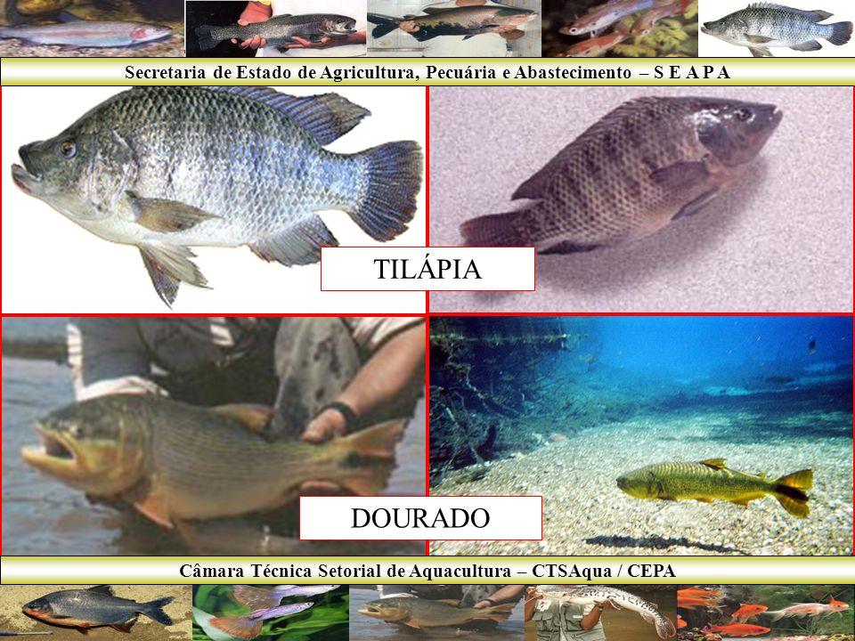 PACU TAMBAQUI Secretaria de Estado de Agricultura, Pecuária e Abastecimento – S E A P A Câmara Técnica Setorial de Aquacultura – CTSAqua / CEPA
