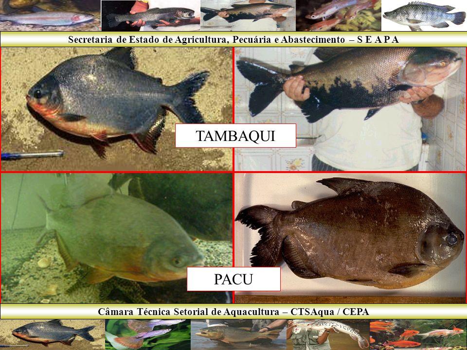 PIRARUCU TRUTA Secretaria de Estado de Agricultura, Pecuária e Abastecimento – S E A P A Câmara Técnica Setorial de Aquacultura – CTSAqua / CEPA