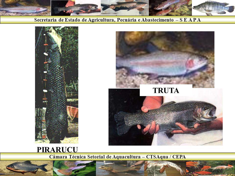 RESULTADOS 2007 Principais Ações: Site Setorial da Aquacultura; Laudo sobre Tilápia; Início do Programa Governamental de Apoio ao Desenvolvimento da Aquacultura em Minas Gerais – MINAS PEIXE; Crédito presumido ICMS = 0,1%.
