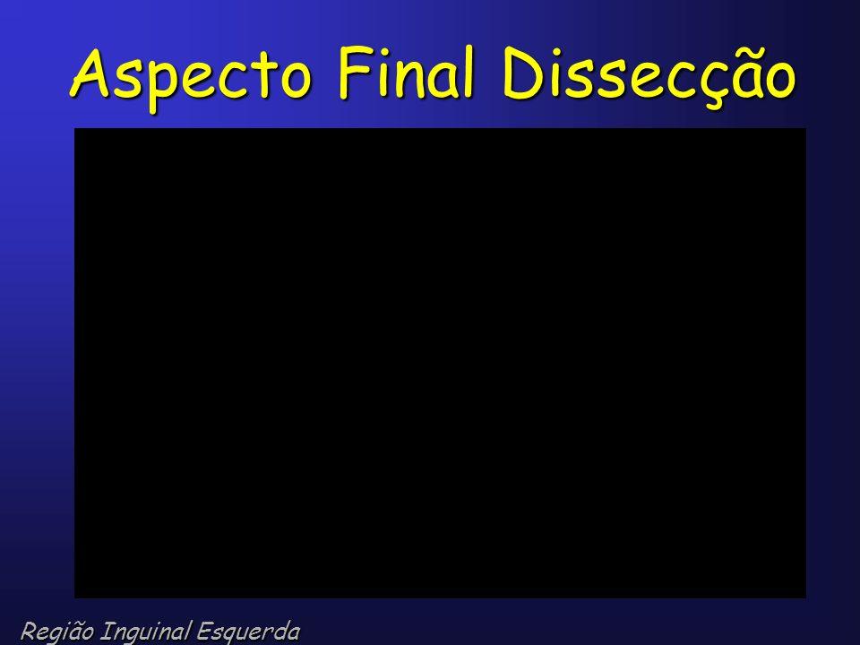 Aspecto Final Dissecção Região Inguinal Esquerda