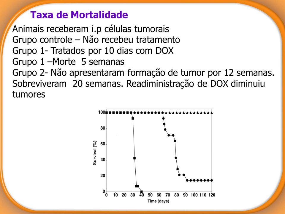Taxa de Mortalidade Animais receberam i.p células tumorais Grupo controle – Não recebeu tratamento Grupo 1- Tratados por 10 dias com DOX Grupo 1 –Mort