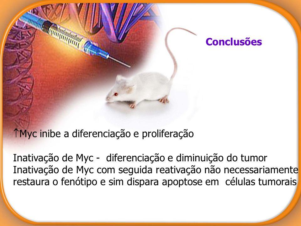 Conclusões Myc inibe a diferenciação e proliferação Inativação de Myc - diferenciação e diminuição do tumor Inativação de Myc com seguida reativação n
