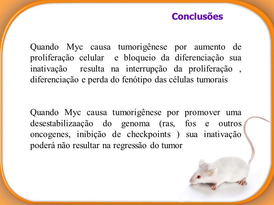 Quando Myc causa tumorigênese por aumento de proliferação celular e bloqueio da diferenciação sua inativação resulta na interrupção da proliferação, d