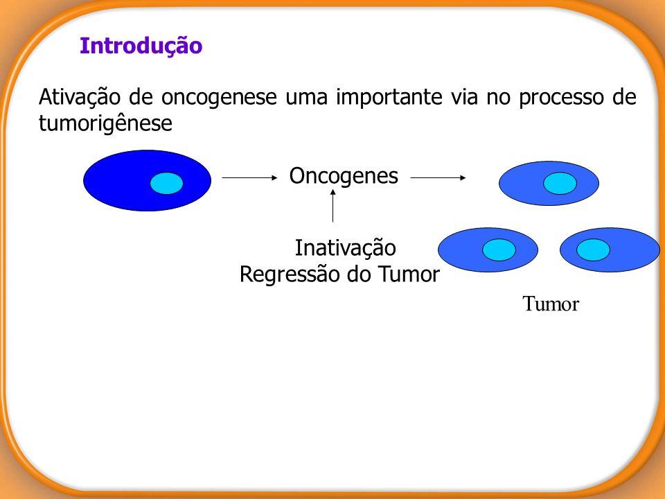 Introdução Ativação de oncogenese uma importante via no processo de tumorigênese Oncogenes Tumor Inativação Regressão do Tumor