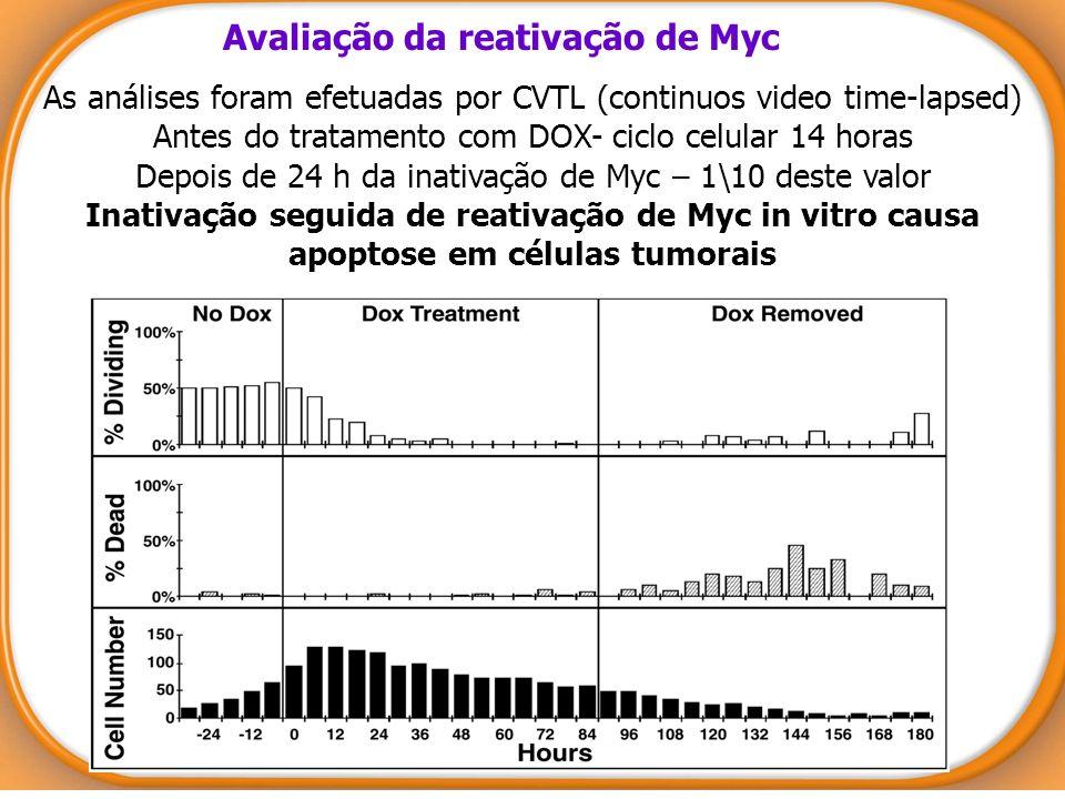 Avaliação da reativação de Myc As análises foram efetuadas por CVTL (continuos video time-lapsed) Antes do tratamento com DOX- ciclo celular 14 horas
