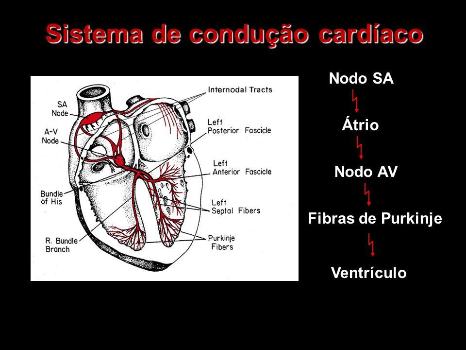 Sistema de condução cardíaco Fibras de Purkinje Nodo SA Átrio Nodo AV Ventrículo