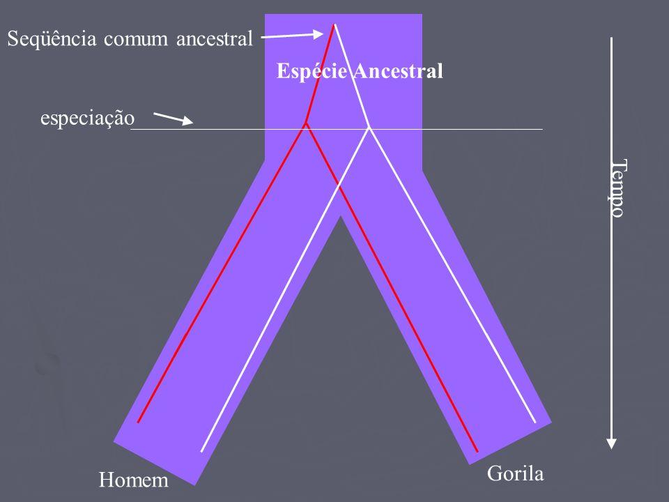 Espécie Ancestral Homem Gorila especiação Seqüência comum ancestral Tempo