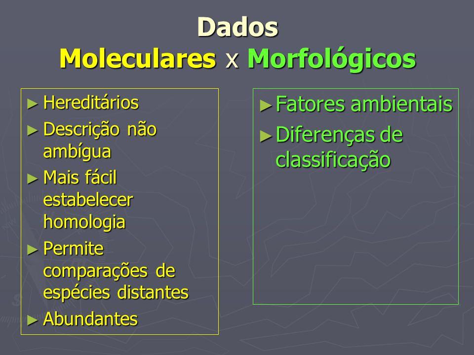Dados Moleculares x Morfológicos Hereditários Hereditários Descrição não ambígua Descrição não ambígua Mais fácil estabelecer homologia Mais fácil est