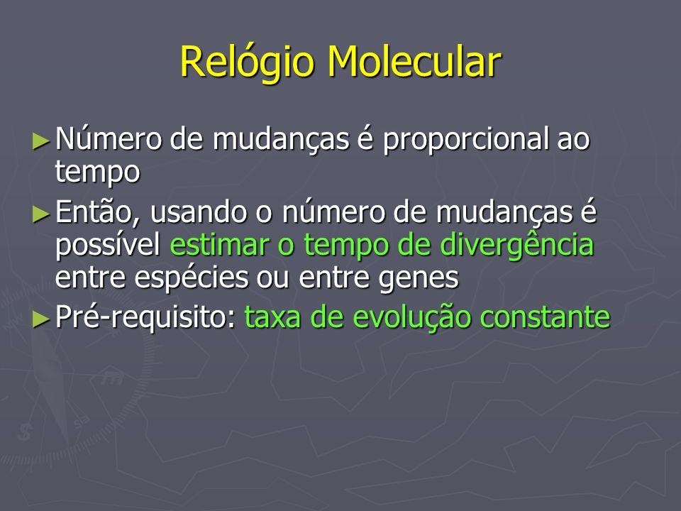 Relógio Molecular Número de mudanças é proporcional ao tempo Número de mudanças é proporcional ao tempo Então, usando o número de mudanças é possível