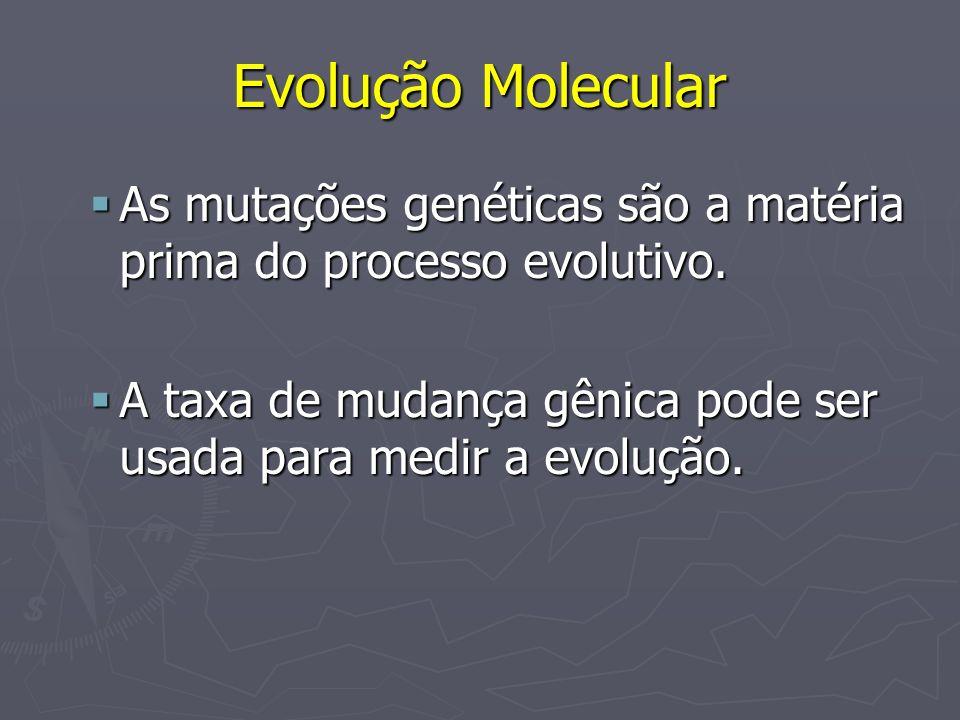 Evolução Molecular As mutações genéticas são a matéria prima do processo evolutivo. As mutações genéticas são a matéria prima do processo evolutivo. A