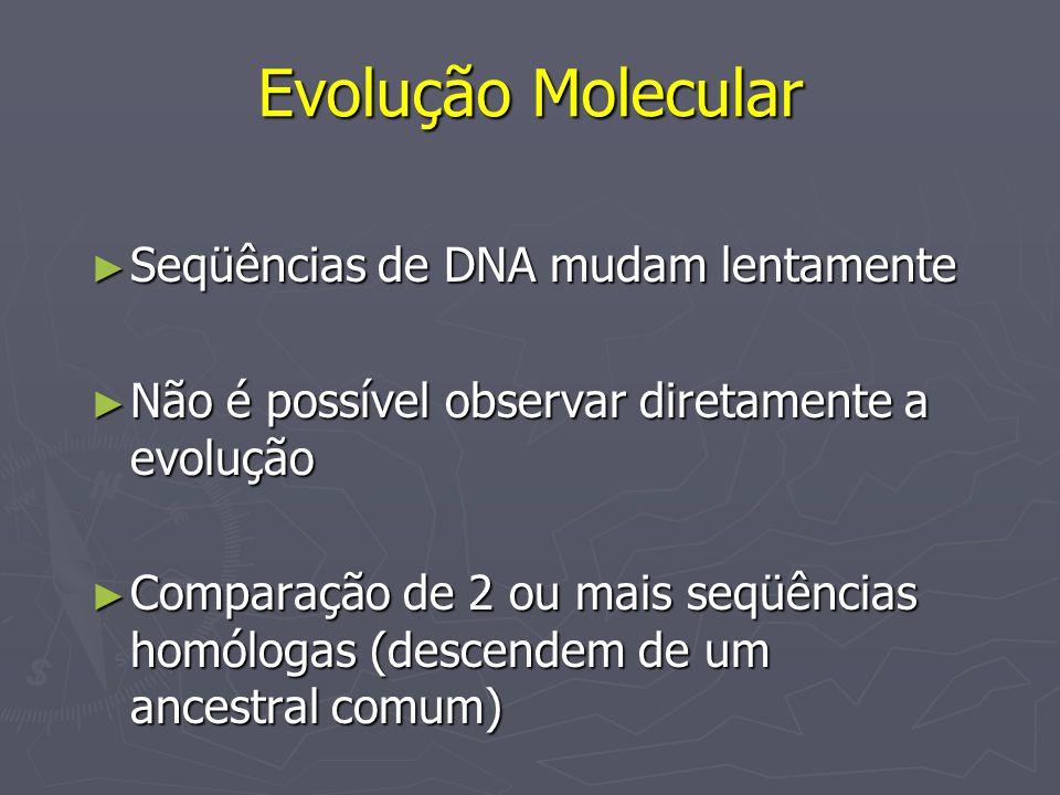 Evolução Molecular Seqüências de DNA mudam lentamente Seqüências de DNA mudam lentamente Não é possível observar diretamente a evolução Não é possível