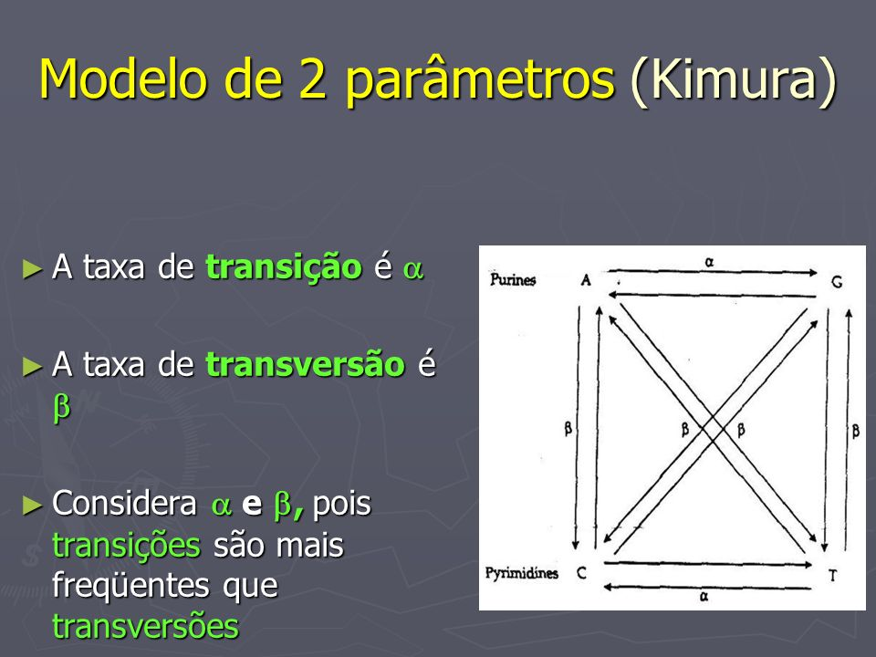 Modelo de 2 parâmetros (Kimura) A taxa de transição é A taxa de transição é A taxa de transversão é A taxa de transversão é Considera e, pois transiçõ
