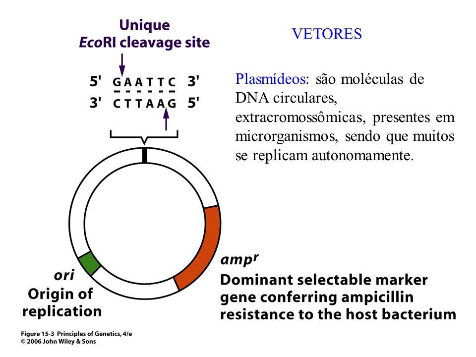 VETORES Plasmídeos: são moléculas de DNA circulares, extracromossômicas, presentes em microrganismos, sendo que muitos se replicam autonomamente.