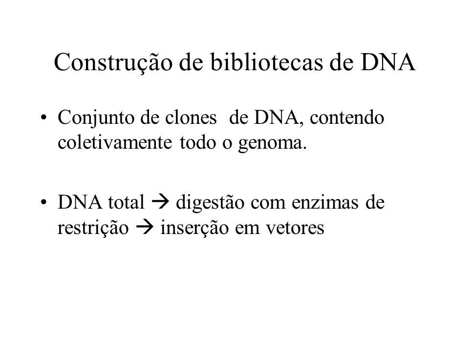 Construção de bibliotecas de DNA Conjunto de clones de DNA, contendo coletivamente todo o genoma. DNA total digestão com enzimas de restrição inserção