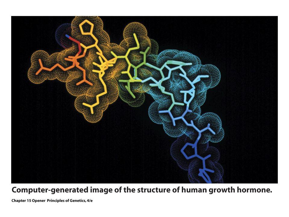 Como amplificar um gene de interesse