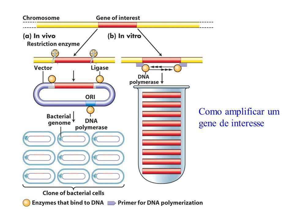 Tipo de DNA doador DNA genômico cDNA – DNA complementar