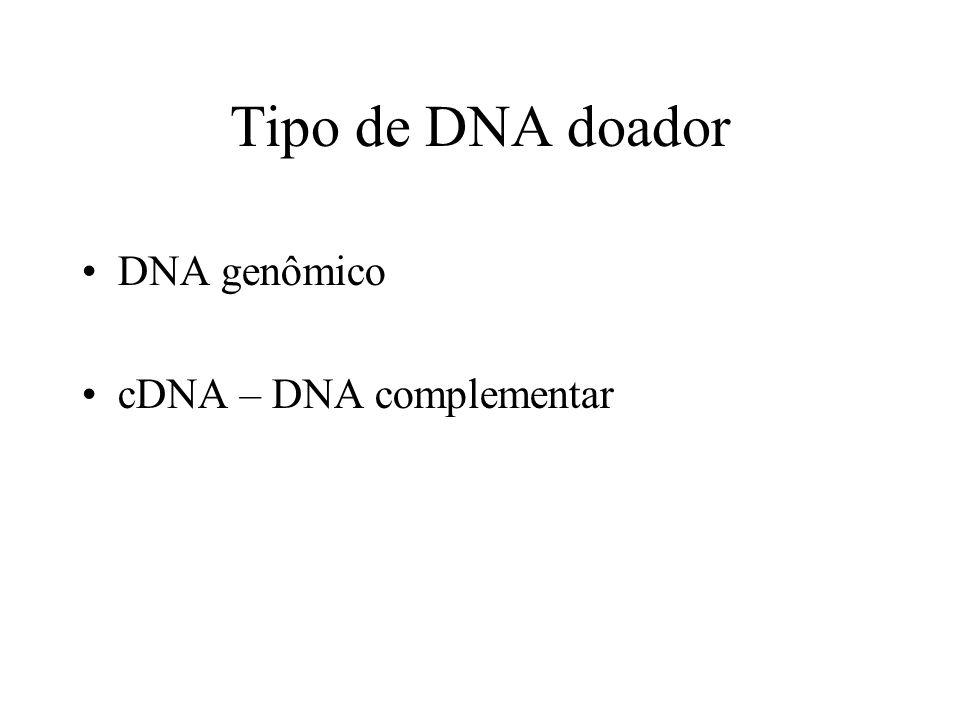 cDNA – contém apenas os éxons