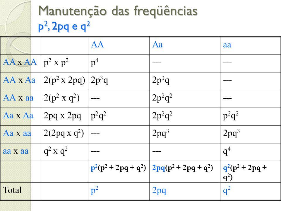 Manutenção das freqüências p 2, 2pq e q 2 AAAaaa AA x AA p 2 x p 2 p4p4 --- AA x Aa2(p 2 x 2pq)2p 3 q --- AA x aa2(p 2 x q 2 )---2p 2 q 2 --- Aa x Aa2