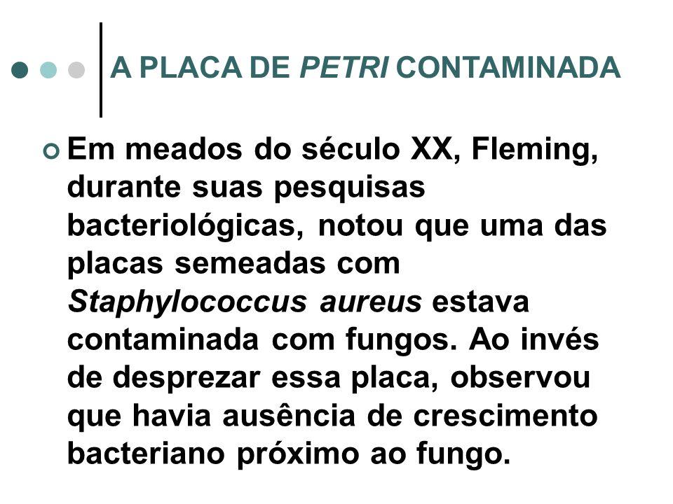 A PLACA DE PETRI CONTAMINADA Em meados do século XX, Fleming, durante suas pesquisas bacteriológicas, notou que uma das placas semeadas com Staphyloco