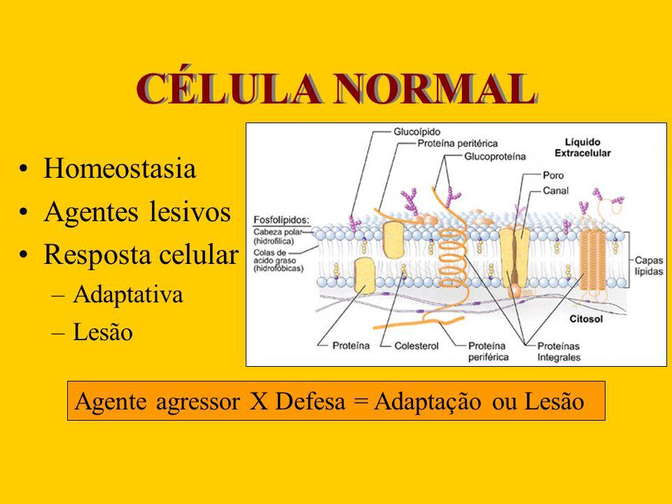 CÉLULA NORMAL Homeostasia Agentes lesivos Resposta celular –Adaptativa –Lesão Agente agressor X Defesa = Adaptação ou Lesão
