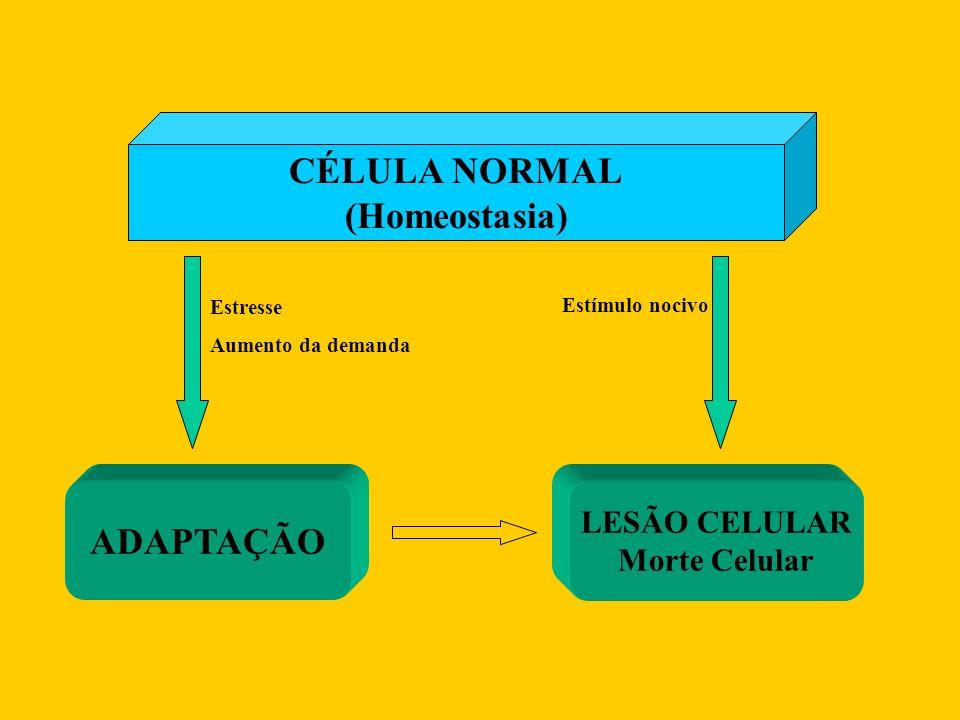 CÉLULA NORMAL (Homeostasia) ADAPTAÇÃO LESÃO CELULAR Morte Celular Estresse Aumento da demanda Estímulo nocivo