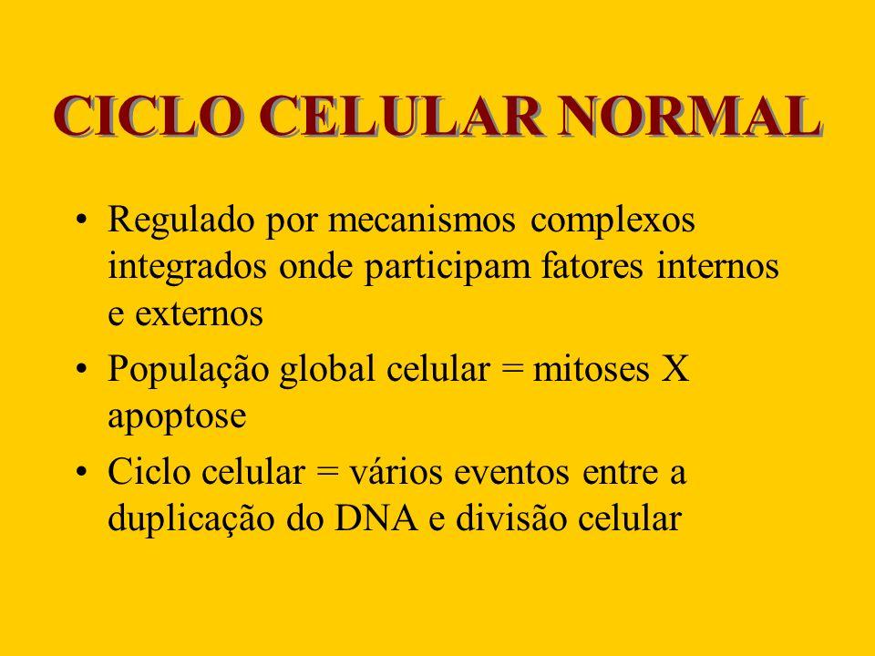 Ciclo Celular – Pontos estratégicos Chechpoints (parada do ciclo) Fatores que inibem o complexo CDK- ciclina – p21 X Fatores que controlam a divisão celular – Fatores de crescimento Atuam por mecanismos: –Autócrinos –Parácrino –Endócrino