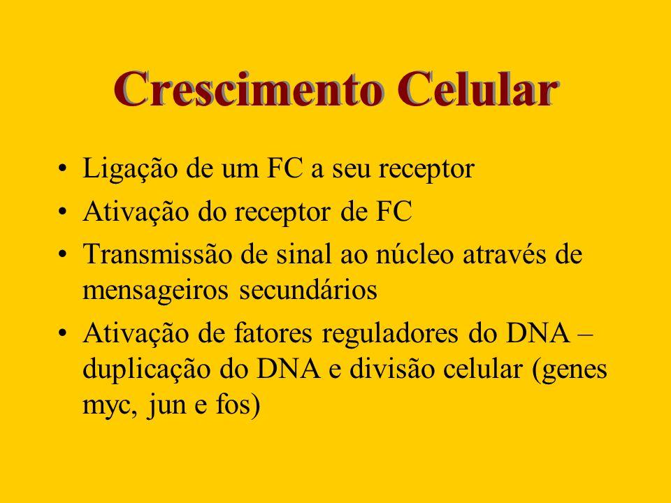 Crescimento Celular Ligação de um FC a seu receptor Ativação do receptor de FC Transmissão de sinal ao núcleo através de mensageiros secundários Ativa