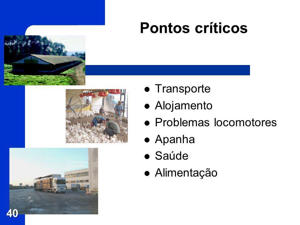 Pontos críticos Transporte Alojamento Problemas locomotores Apanha Saúde Alimentação 40