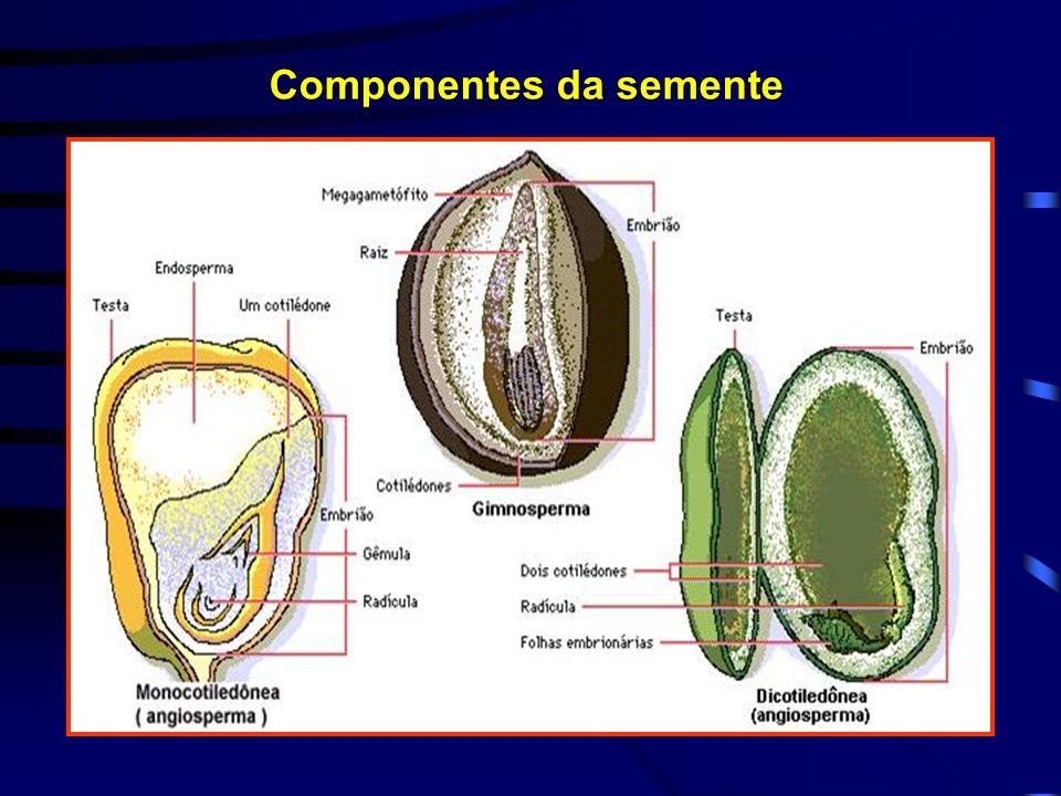 Componentes da semente