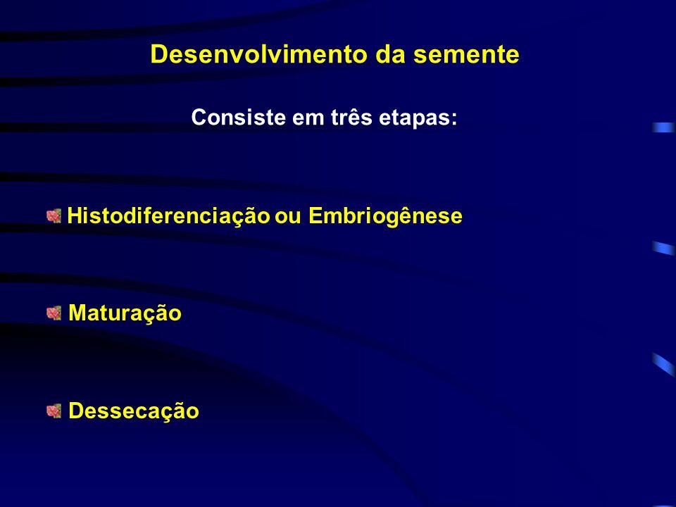 Desenvolvimento da semente Histodiferenciação ou Embriogênese Maturação Dessecação Consiste em três etapas: